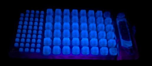 testing tray